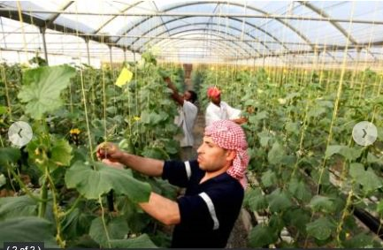 UAE farmers to get seeds, fertilisers to boost harvest