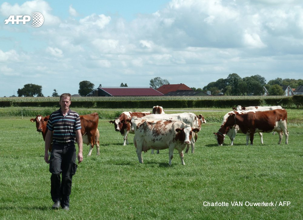 Online matchmaker aims to save Dutch farms with no heirs