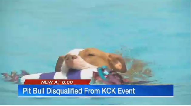 Missouri dog can't compete in Kansas City because it looks like a pitbull