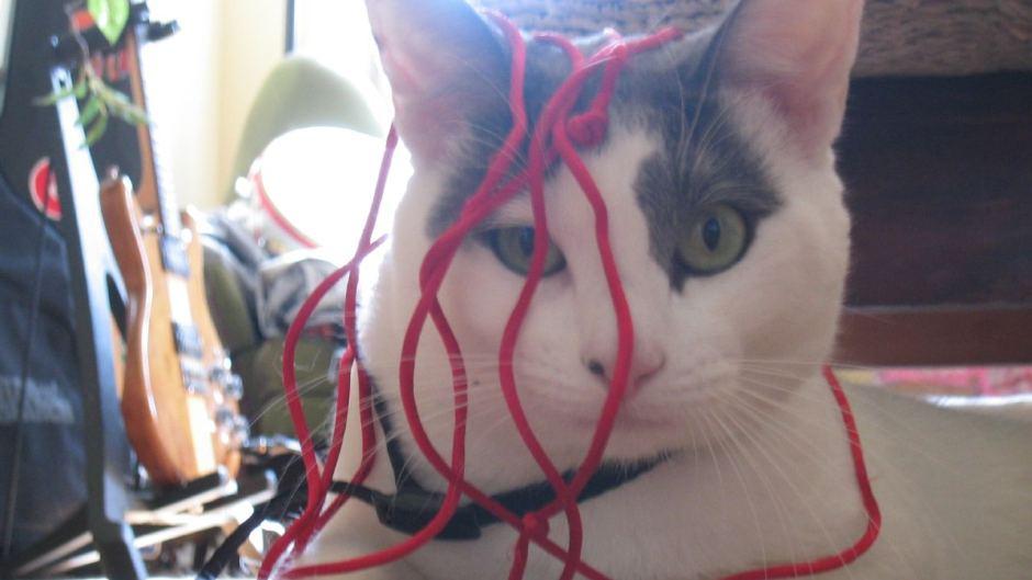 Seven common myths about pet cats