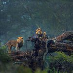 In Pics: From tree-climbing lions in Kenya to a Lonely Tree, check out the winners of the DJ Memorial Photo Contest