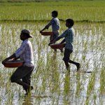 Climate Change Drove 59,000 Farmers To Suicide In India In 30 Years: Study