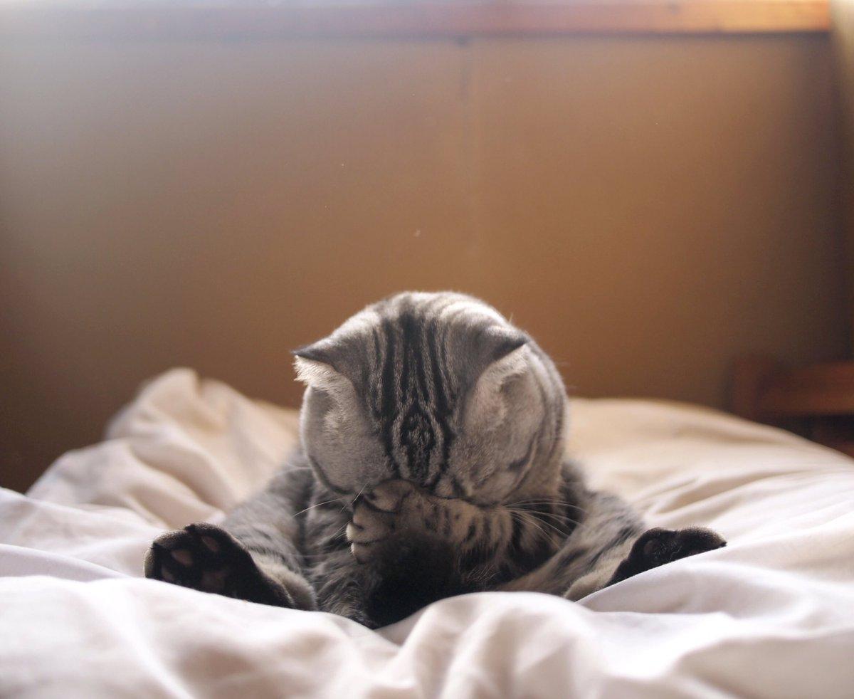 「かあさん、e-hon月間猫本ランキング18位をありがとう」漫画・絵本では、 夜回り猫 / 猫絵十兵衛 / ノラネコぐん
