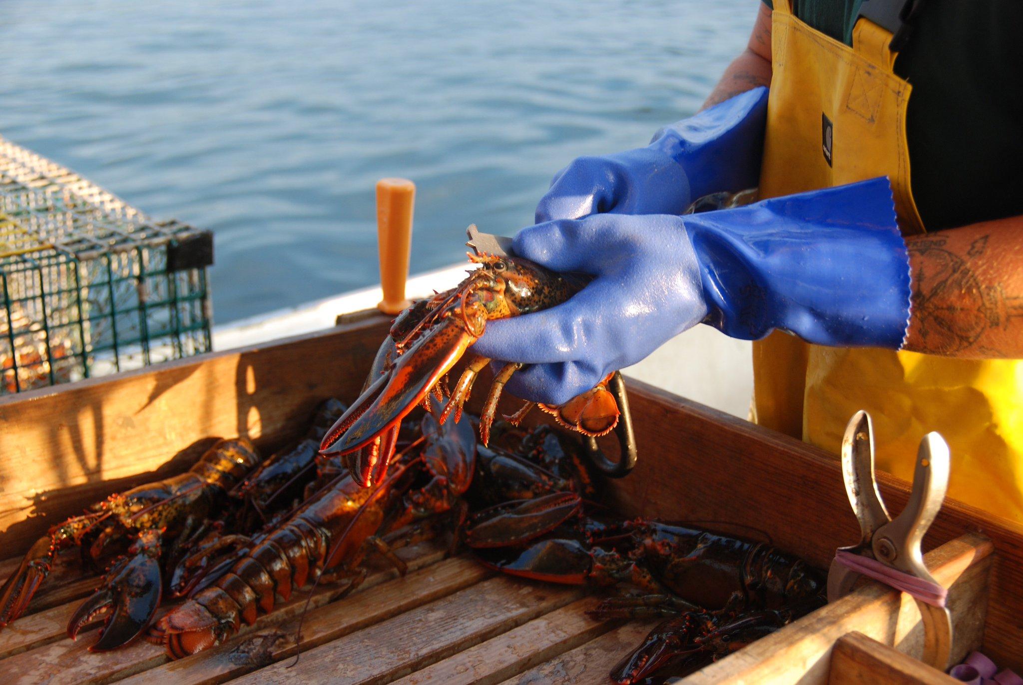 Lobster lovers rejoice! Maine Lobster Festival begins https://t.co/v95RYad93F https://t.co/WITPtn9qIJ