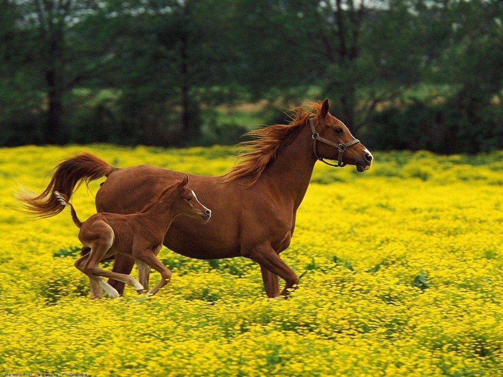 🐴 🐎 HORSES 🐎 🐴  - cover
