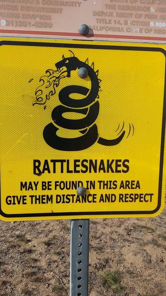 #Battlesnakes ???????? https://t.co/2MlfTyBbSE https://t.co/tu0lIzq8Id