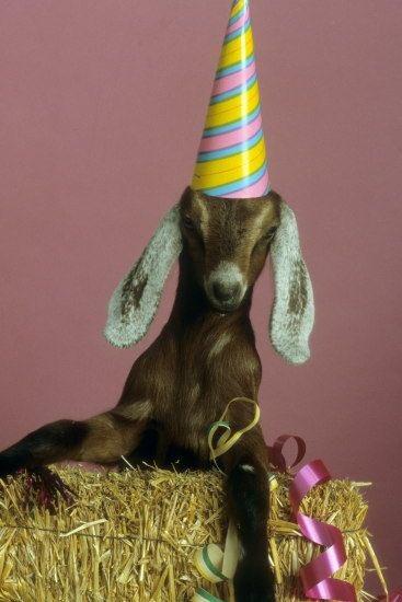 Happy 40th Birthday to Tom Brady today.