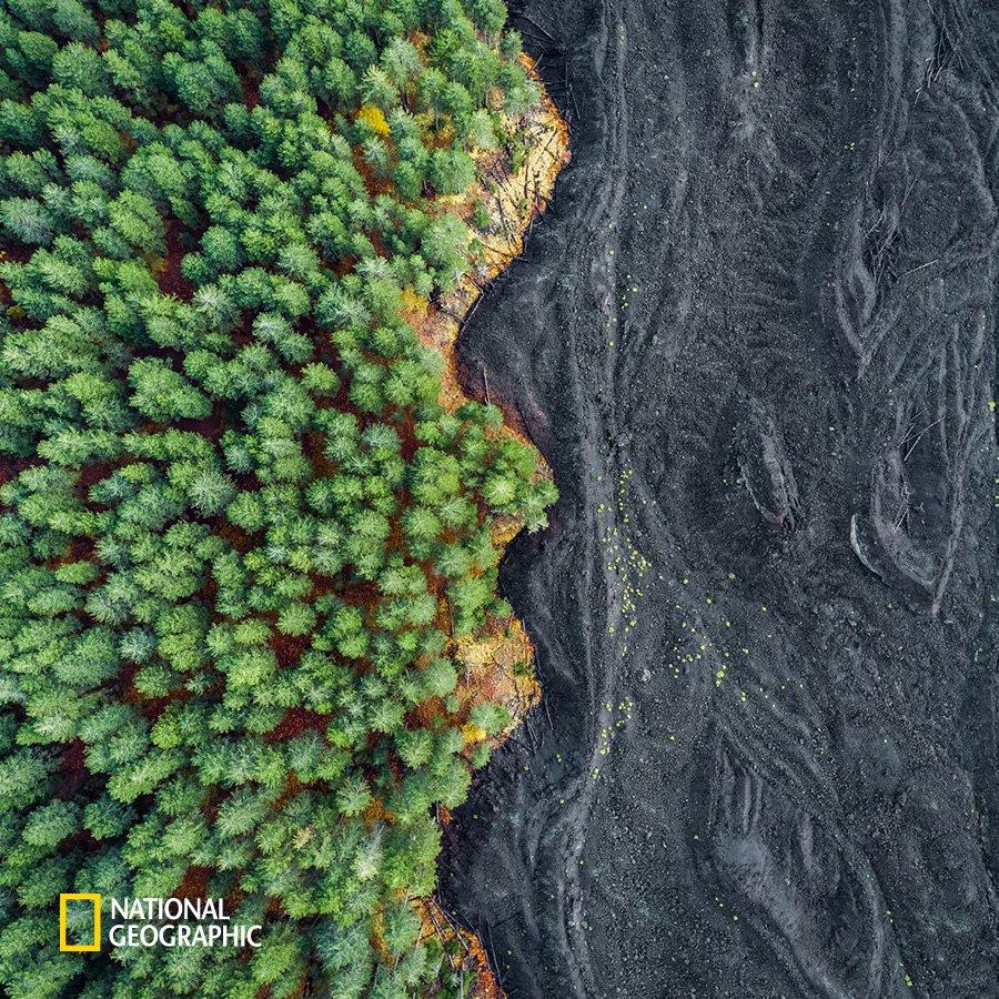 #NG오늘의포토 2002년 폭발한 시칠리아 섬 에트나 화산! 폭발 당시에는 영화 #스타워즈 에 등장하는 무스타파 행성을 연상시킬 정도로 드라마틱했습니다. 때문에 울창한 숲과 굳어버린 용암이 경계를 이루는 지금의 모습은 지나칠 정도로 평화로워 보입니다. https://t.co/YSgUDkZZIm