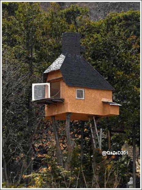 الهندسة المعمارية المذهلة الغابة.