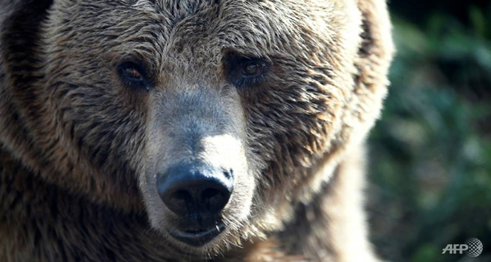 Bear kills young zookeeper in Sweden