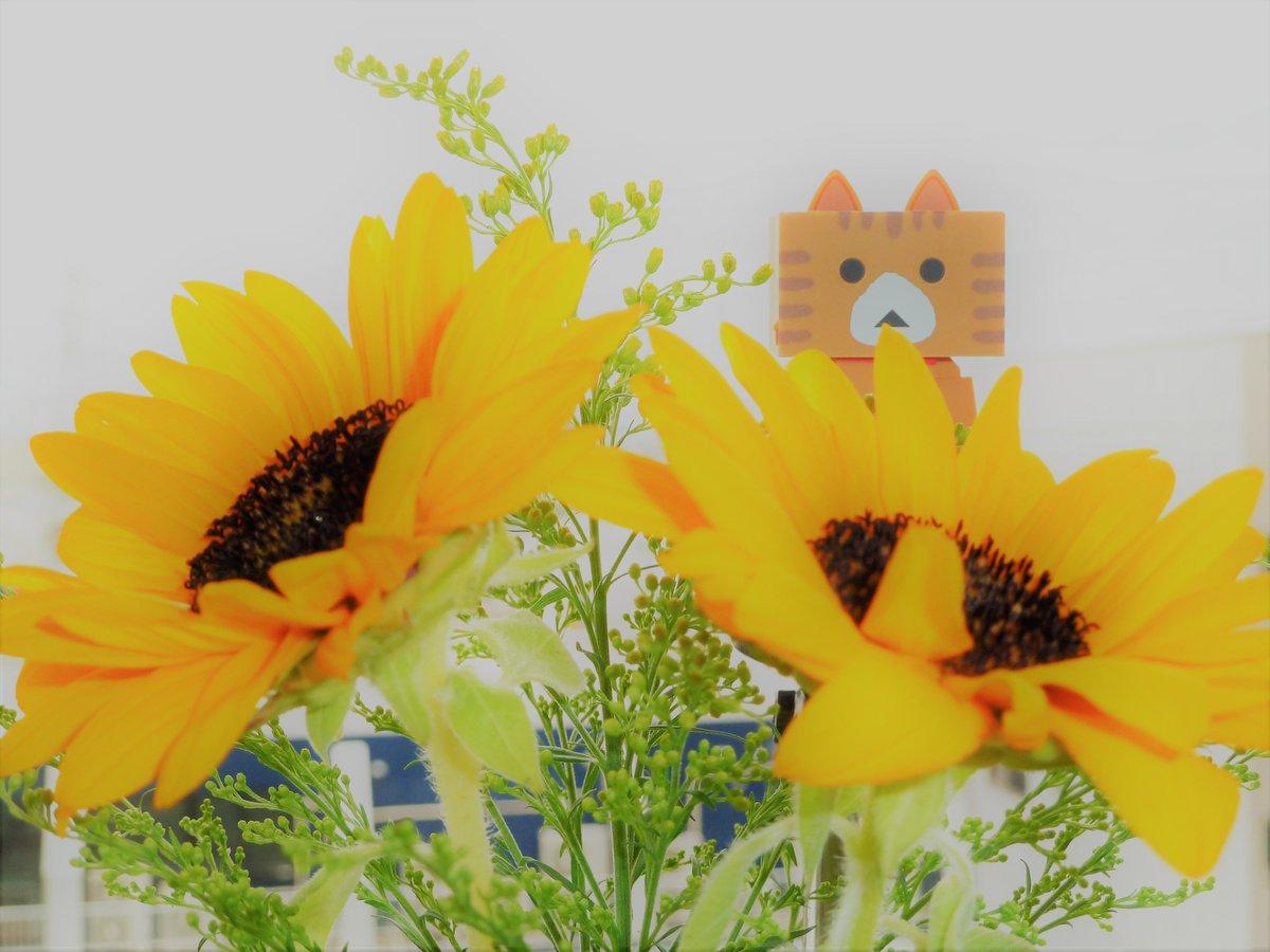 薄日が差してきました☀夏らしい天気はいつになるのかな🌺よい週末をお過ごしください🍀Have a nice weekend