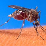 First human case of West Nile virus found in Ottawa