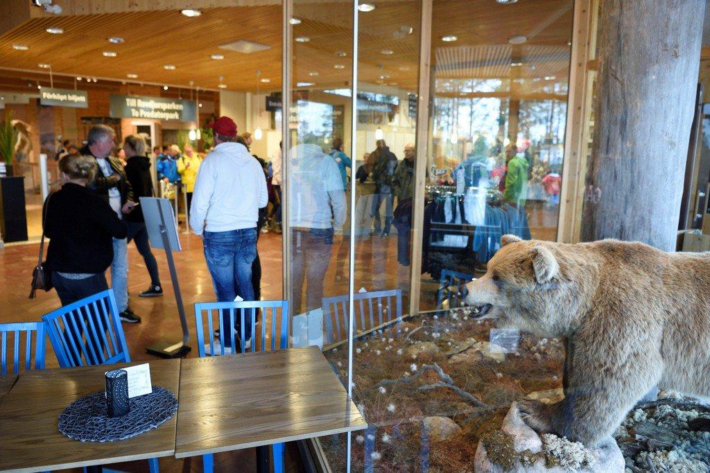 Bear crawls under fence at Sweden zoo, kills worker