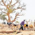 Climate change? Nigerian farmers not being reached