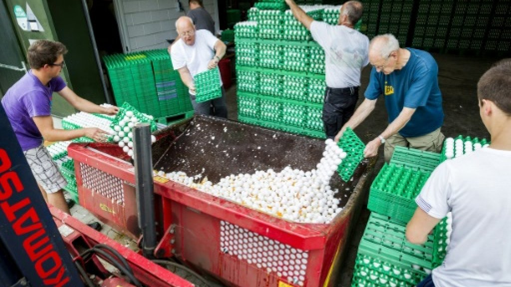 Aldi pulls Dutch eggs in Germany as scare widens