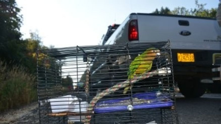 Parakeet rescued after Oregon rollover crash