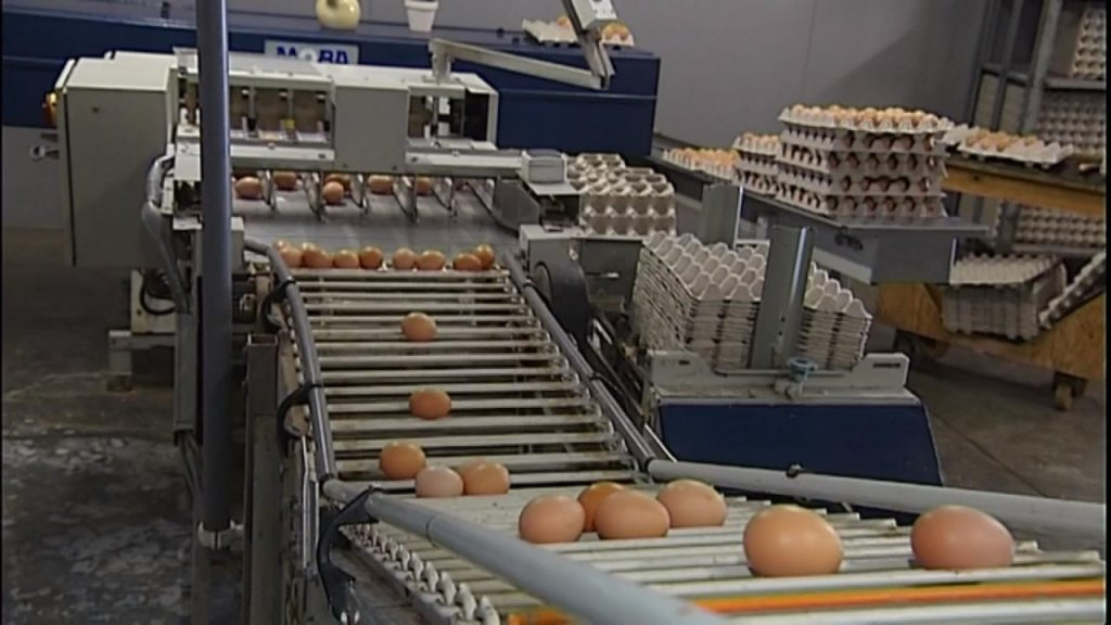 BUSINESS DAILY - Belgium knew about Dutch egg contamination before public admission