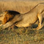 Lions maul herder to death at Nairobi National Park