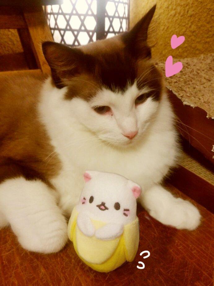8月8日は #世界猫の日  にゃ!! ばなにゃがにゃんこと遊んでいるよ☆ 今日も世界中のにゃんこ達にとっていい一日になり