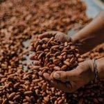 Doçuras à beira-mar: cidade baiana se destaca pela fabricação de chocolates
