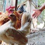 Lahad Datu man beaten to death over stolen chicken