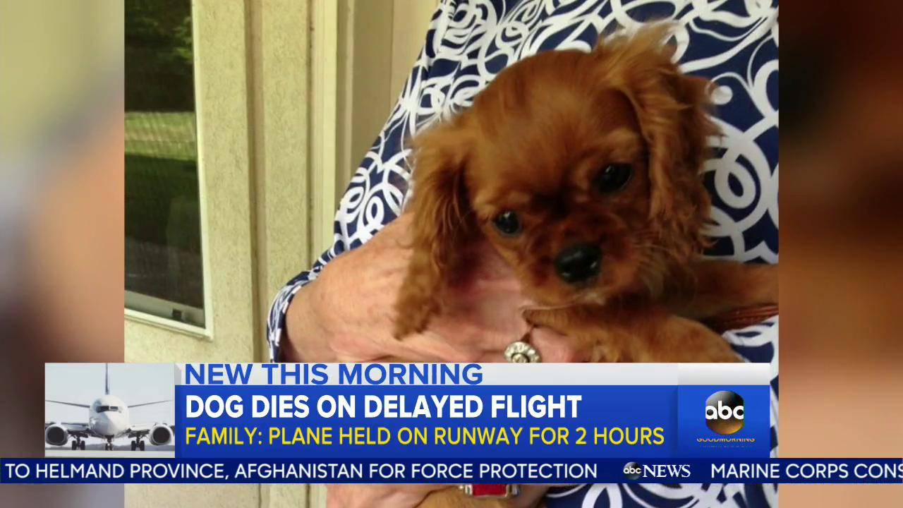 WATCH: Family says their dog died on delayed United flight stuck on the tarmac for 2 hours: https://t.co/cWJShLm5CW https://t.co/eG3XpJ6j9Q