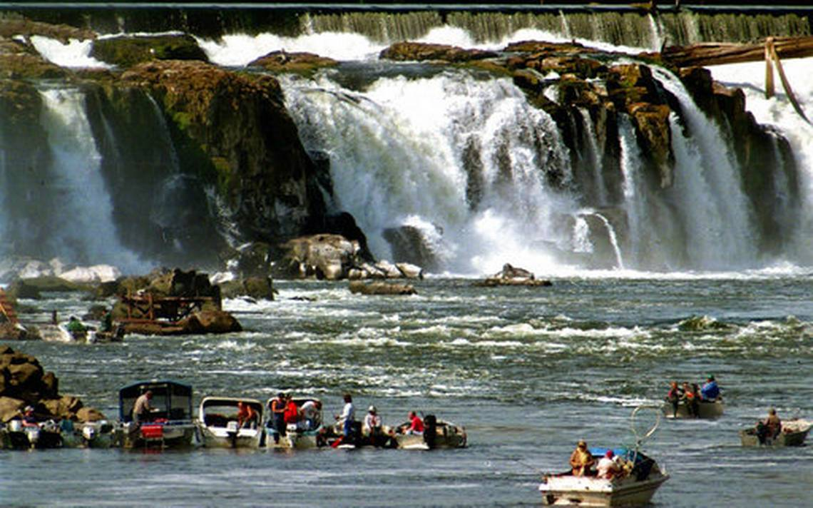 Oregon warns that Willamette Steelhead face extinction