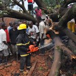 Falling tree kills one, injures two in Kampala