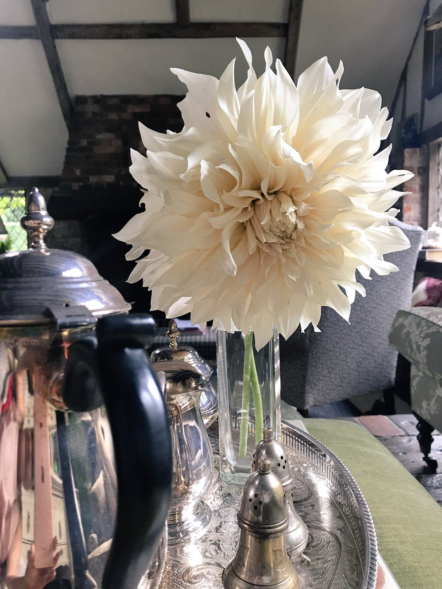 My Dahlias from the Veg Patch ???????? https://t.co/NgNLQC7v8X