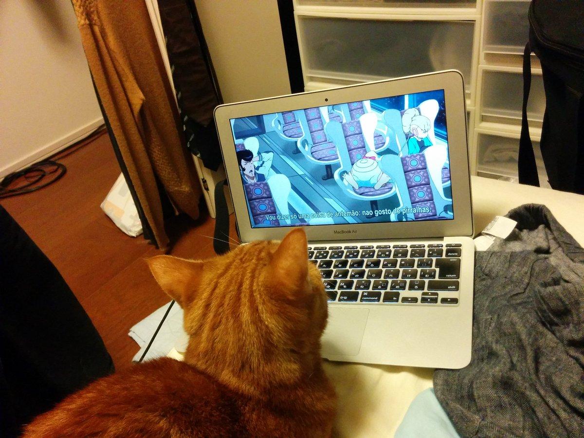 スペースダンディを見る猫