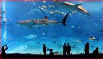 perjalanan ke Aquarium raksasa singapore, dengan membeli tiket murah di https://t.co/uqSWdavn9K https://t.co/AfLkmRbzFH