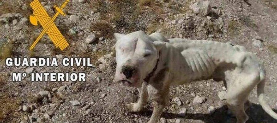 Rescatado un cachorro abandonado a punto de morir de inanición en el paraje de Chirivel