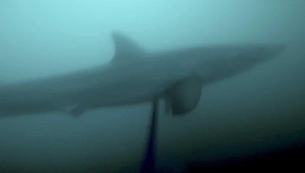 La pesca submarina convertida en terror. La sorpresa que te dejará sin aliento https://t.co/78E7mUD4HE #MARCAPlus https://t.co/u9PP5JShaH