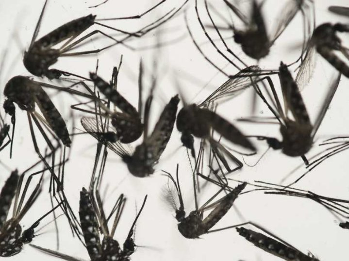 test Twitter Media - @TheWECHU reports first adult #zika virus mosquito in Canada found here @CityWindsorON https://t.co/sFVKrHoaUQ https://t.co/H3URfDZd5Y