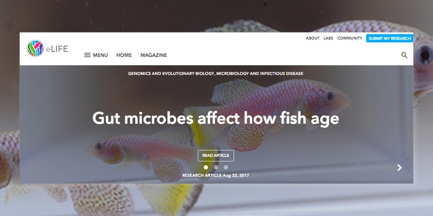 test Twitter Media - New on our homepage today, gut microbiota regulate life span of the short-lived African turquoise killifish https://t.co/2wYI4o0KFA https://t.co/G3KcLUrL5I