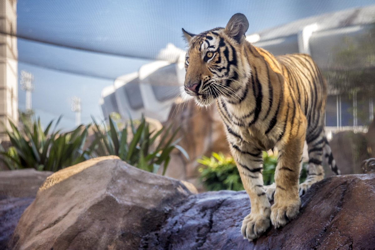 Mike VII