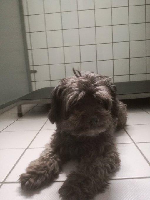 RT @Rene_Dierenambu: Hondje is inmiddels weer herenigd met zijn eigenaar. Iedereen weer bedankt voor het retweerten. https://t.co/QFR0RglbOC