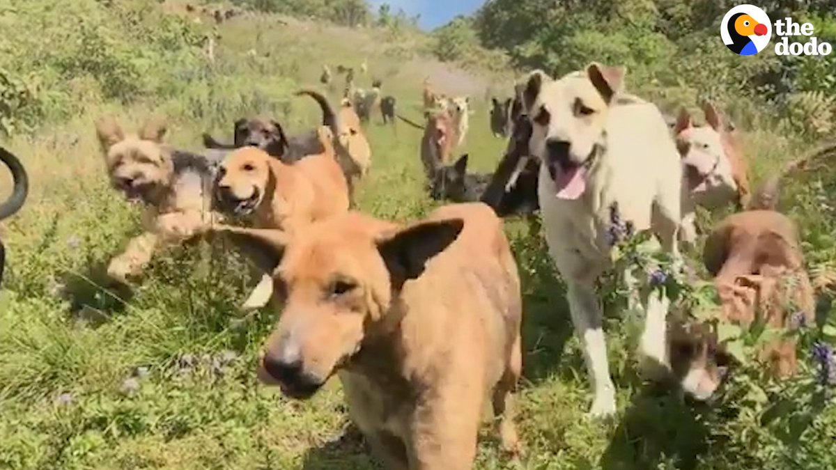 RT @dodo: These 600 dogs all roam free at a sanctuary — and you can visit them to help out ???? https://t.co/w5Ji9LLnos
