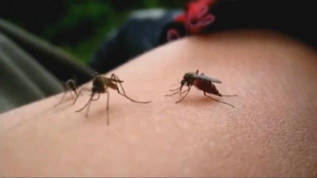 Mosquitoes linked to Zika virus found in Socorro County