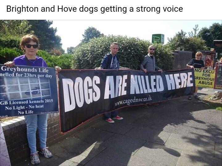 RT @PetLevrieri: 🇬🇧#Brighton & #Hove Against #GreyhoundRacing 👏👏 https://t.co/OHtI8sshBp https://t.co/yrPWktsCTN