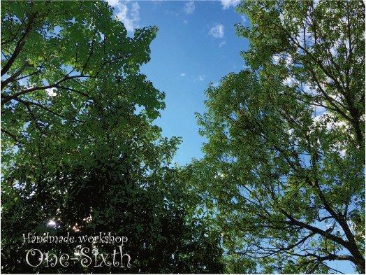 こんにちは。ジャングルお庭から仰ぐ爽やかな青空、梢を吹き抜ける清々しい風が吹いています。久々になんて気持ちのいい土曜の午