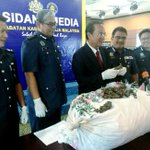 Sabah merely a transhipment point for the attempted smuggling of RM103mil Pangolin scales