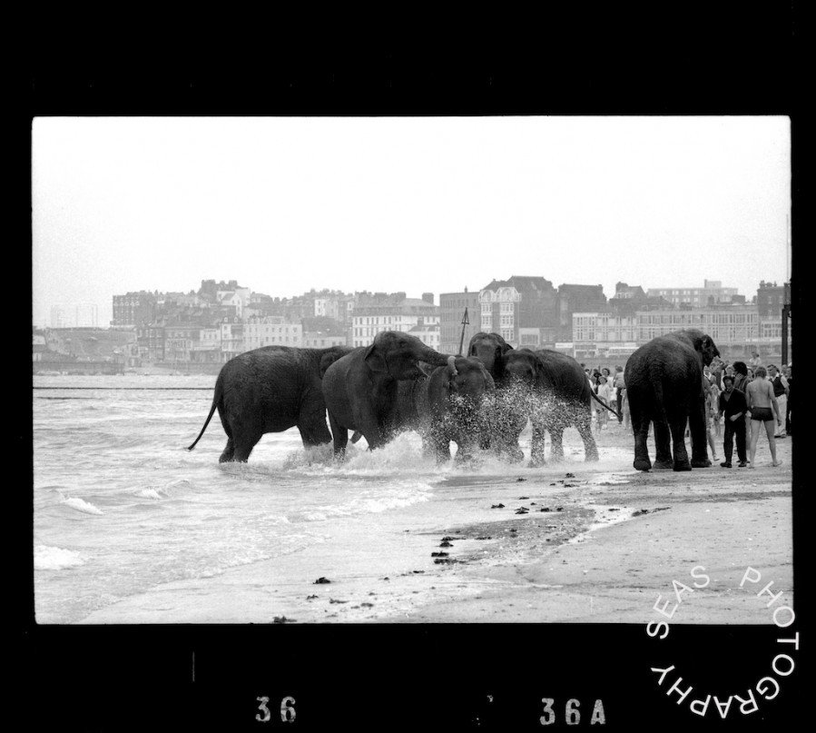 RT @SEASPhotography: Happy #WorldElephantDay  Elephants taking a stroll along the beach at #Margate #Kent https://t.co/7Z6qPaJOvP