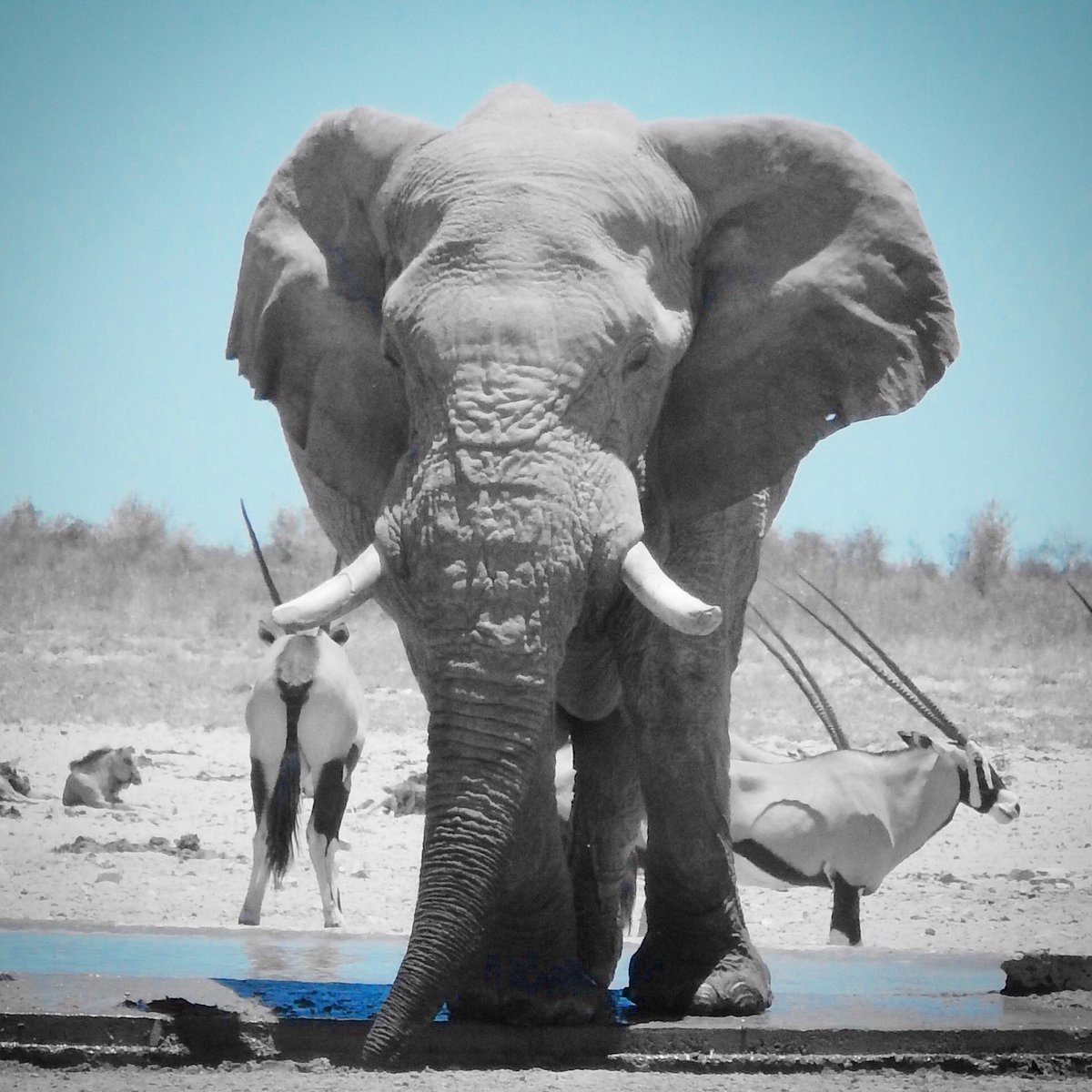 RT @GeorgPapp: Respect & protect these majestic creatures (Etosha NP, Namibia) 🐘#WorldElephantDay #Travel https://t.co/nOt6gSGy5w