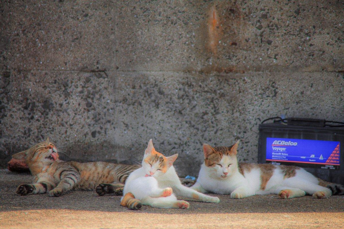 三者三葉#photography #写真好きな人と繋がりたい #猫写真 #旅行 #香川県 #佐柳島