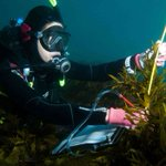Sydney's underwater crayweed forest makes recovery in Eureka moment for scientists
