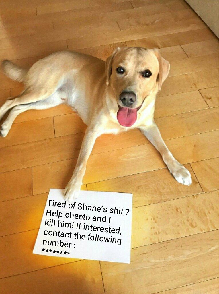 #shanepaper