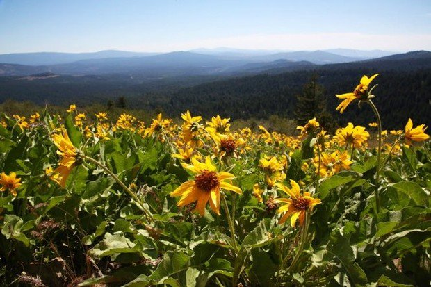 Scientists urge no changes to Cascade-Siskiyou Monument (Guest opinion)