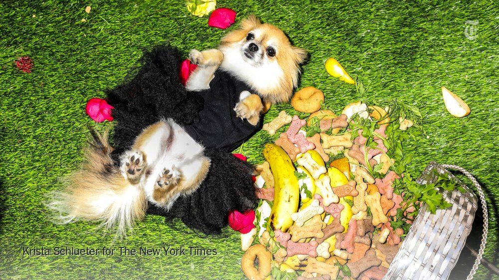 Treats, jewelry and AstroTurf: scenes from an art show for dogs https://t.co/57exqvZu9C https://t.co/zq73uYdLbu