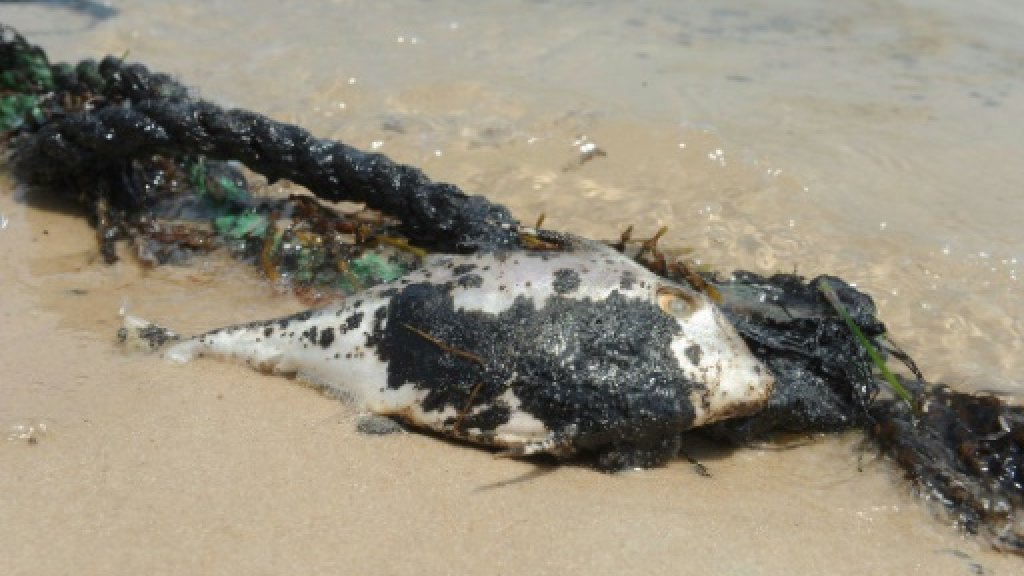 Kuwait says most of Gulf oil spill cleaned up